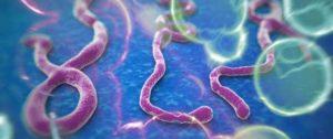 الفَيْض. قراءةٌ كتابٍ تنبَّأ وباء tbl_diseases_disease_3288_275-300x126.jpg